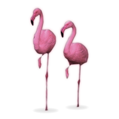 Flamingos machen Yoga